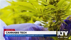 cannabis-iltv